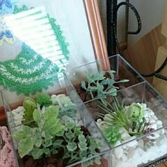 寄せ植えフェイクグリーン 透明な仕切りのあるケースに、ストーンやバ…
