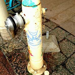 消火栓/青森ねぶた/青森市/ねぶた 青森の駅前通りの消火栓。ねぶたアート(/…