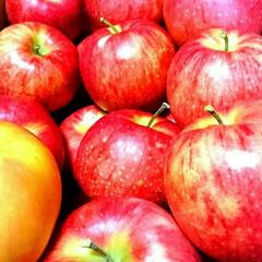 フルーツ/スターキング/りんご/秋/グルメ 亡くなった祖父母はりんご農家でした。その…