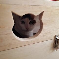 ネコ こんばんにゃ(=^・^=) くうたもst…