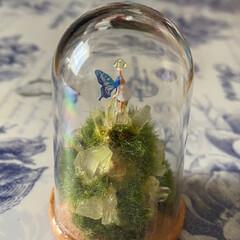 シースルーの翅の妖精/LEDライト/小瓶の妖精/妖精/妖精標本商会 妖精標本商会『水晶谷の妖精』(その4)