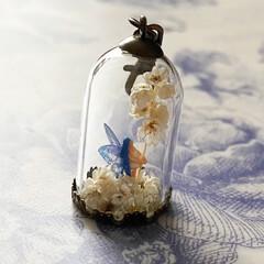妖精標本商会/妖精/夜光の妖精/小瓶の妖精/LEDライト/シースルーの翅の妖精 妖精標本商会 『ライスフラワーの妖精』(…