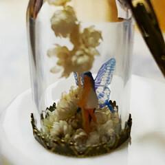 妖精標本商会/妖精/夜光の妖精/小瓶の妖精/LEDライト/シースルーの翅の妖精 妖精標本商会『ライスフラワーの妖精』(チ…