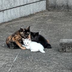 野良猫ちゃん/猫 梨莉ちゃん🐶のお散歩中に野良の子猫ちゃん…