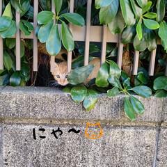 野良猫ちゃん/猫 梨莉ちゃん🐶のお散歩で子猫ちゃん発見❕ …