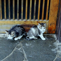 野良ちゃん/仔猫 職場の近くで野良の仔猫ちゃん❗️ ちっち…