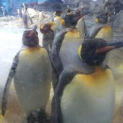 水族館/おでかけ 長崎ペンギン水族館に行ってきました。間近…