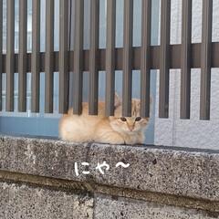 野良猫ちゃん 先週見かけた野良の子猫ちゃん🐱 少し大き…