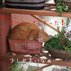 野良猫ちゃん お隣の玄関先の鉢植えに…野良猫ちゃん❗️…