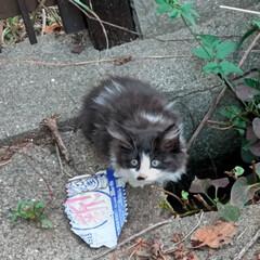 野良猫/子猫ちゃん 梨莉ちゃん🐶のお散歩中にあった子猫ちゃん…