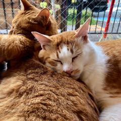 猫が好き/LOHL PARK/猫カフェ お洒落な猫カフェ🐈💓(8枚目)