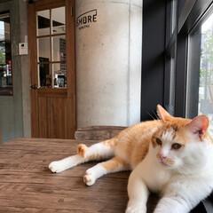猫が好き/LOHL PARK/猫カフェ お洒落な猫カフェ🐈💓(6枚目)