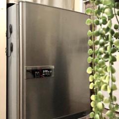 セルフリノベーション/DIY女子/ペイント/TOSHIBA/冷蔵庫 冷蔵庫買い替えに伴い、入れ替えの時を 狙…