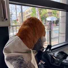 猫が好き/LOHL PARK/猫カフェ お洒落な猫カフェ🐈💓(7枚目)