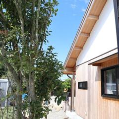 西尾市/木組の家/自然素材/漆喰/杉/外壁/... 西尾市の木組の家。自然素材で仕上がる。