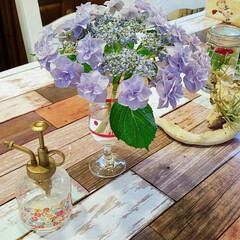 今日も頑張ろう/紫陽花/おはようございます/梅雨 お隣さんにいっぱい紫陽花あるから、こうや…