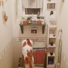きなこ/ペット どうしてもトイレの流れる水しか飲みません…