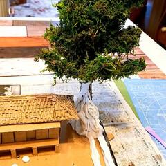 今日はここまで/いい感じになってきた😊/やーい!おまえんちおばけやーしき/草壁家/シリーズ第6段/ダンボールDIY 大きな、くすの木を裏山に植えました。 庭…