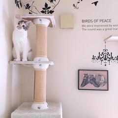 ウォールステッカー/遊ぶ/お気に入り/キャットウォーク/キャットタワー/猫 キャットタワー&キャットウォークは お気…