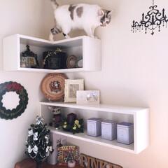 クリスマス/ウォールステッカー/猫の為の空間/猫/キャットウォーク/飾り棚/... キャットウォーク件 シェルフをDIY‼︎