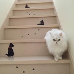 簡単/DIY/猫/貼る/階段/シール/... ウォールステッカーを階段にバランス良く配…