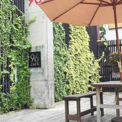 珈琲/ガーデンパラソル/アイビー/グリーン/コンクリート/解放感/... 黒壁スクエア その③ オープンテラスのカ…