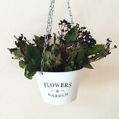 吊り下げる/coucou/ハンギング/300円ショップ/ドライフラワー/飾る/... 我が家の 生花やグリーンを飾る時は 専ら…