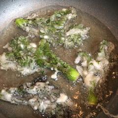 フード タラの芽を天ぷらにしております。