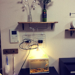 LED電球/USBライト/吊り下げ電球/電球/裸電球/DIY/... ダイソーでUSBから電源を取るLED電球…
