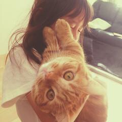 マンチカン/猫と子供/猫 なんとゆーショット。絡みたい姉とほっとい…