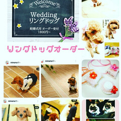 facebook/Instagram/リングピロー/リングドッグ/結婚式/オーダー受付中/... 私は、犬似顔絵だけじゃなくて、、、😅  …(2枚目)