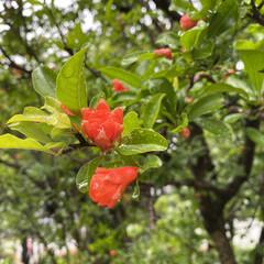 可愛い/雨/花 おはようございます。 今日から分散登校な…(3枚目)