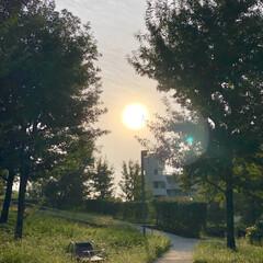 朝/風景/朝日 朝の太陽😊大きい✨✨