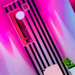 トイレ ピンクの蓮ライトが1000円だったので、…