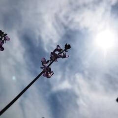 自然/空/雑草/花 今日は仕事が休みだったので、畑の手入れを…