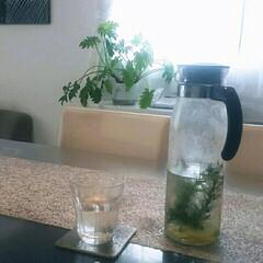 カフェ/食器/100均/ニトリ/シルバー/無機質/... 自分で育ててるハーブで日がわりハーブウォ…