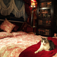 トワルドジュイ/フランス生地/DIY/輸入壁紙/本棚壁紙/猫 ランプシェードをフランス生地でリメイク。…(1枚目)