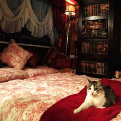 イギリス寝具/トワルドジュイ/ベッドカバー/ランプシェードリメイク/IKEAシェード/輸入壁紙/... お気に入りのイギリスメーカーのベッドカバ…(1枚目)