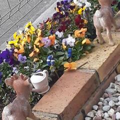 「春だね〜 花たちが咲き始めた~  イチゴ…」(7枚目)