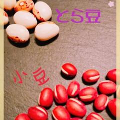 煮豆/お赤飯/とら豆/小豆/きたゆきもち とら豆と小豆を頂いたので これからお赤飯…