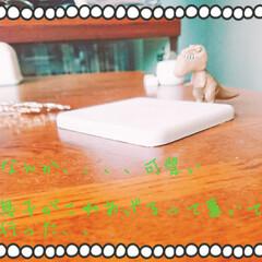お土産/ガチャポン/恐竜