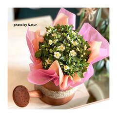 ショップにお花/生活雑貨 お客さまからのプレゼント ご縁に感謝。