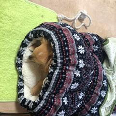 おやすみショット ❤️乱太郎❤️今日寒いからかなぁ〜不機嫌…