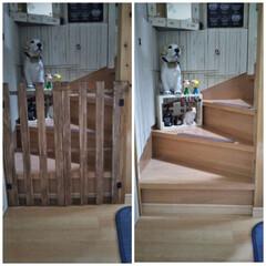 ケガ防止/ペット/階段/すのこ/DIY プリンが、ちょっと腰を痛めてしまい💧獣医…(1枚目)