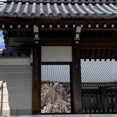 散歩/桜 先程の続きです🌸 良い天気☀️で少し風は…(4枚目)
