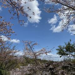 散歩/桜 先程の続きです🌸 良い天気☀️で少し風は…