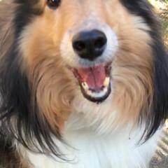笑顔/ペット/犬 この笑顔が大好きです。😍(1枚目)