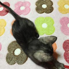 猫🐱/ペット 小さいころの写真🐱