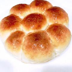 朝ごはん/オーブン/蜂蜜/ちぎりパン/手作り/焼きたてパン/... マル型 テカテカちぎりパン(・u ・)ŧ…