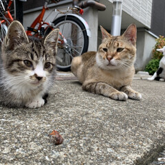 猫 猫図鑑🐈 仔猫達もだいぶ懐いてきて自分か…(2枚目)